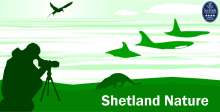 shetlandnature.net