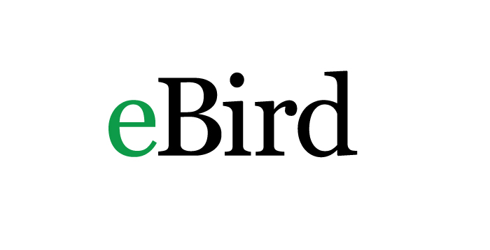 eBird