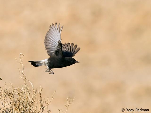 basalt_fly