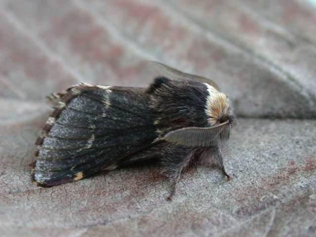 December-Moth6