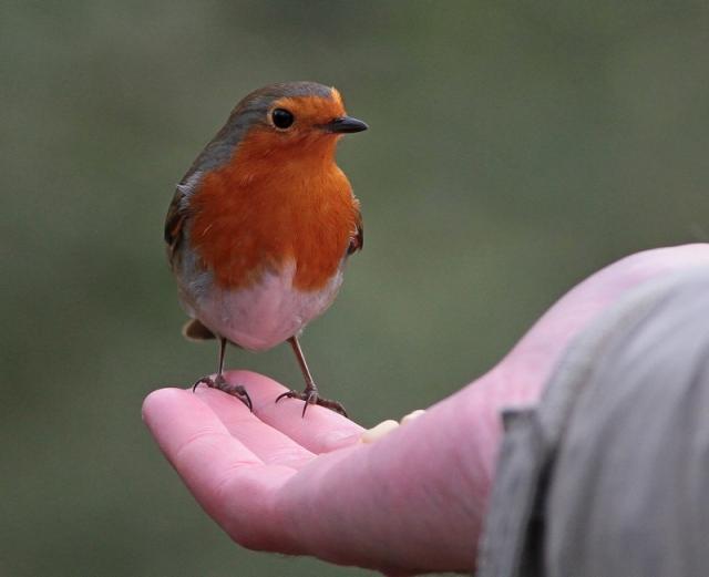 robin on richard Hyde park feb 13