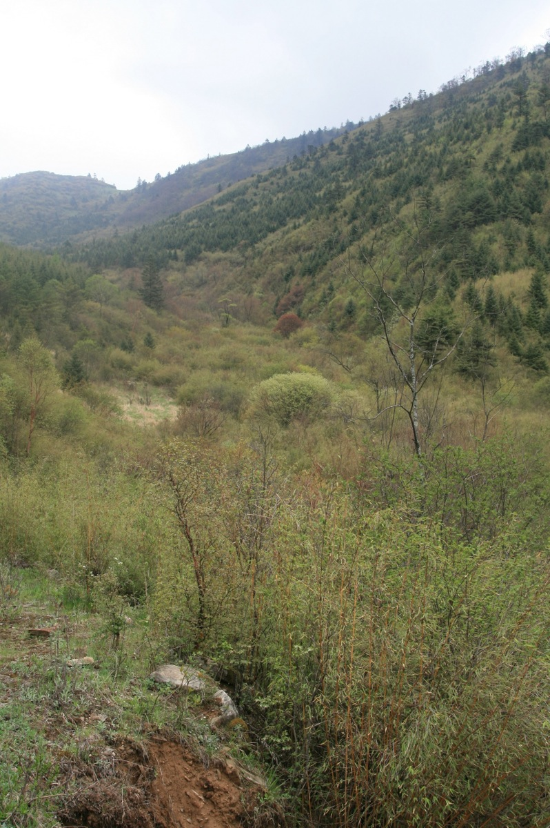 Blackthroat habitat