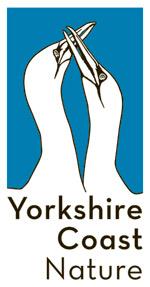 ycn_logo_4nonwhitebackgroung1
