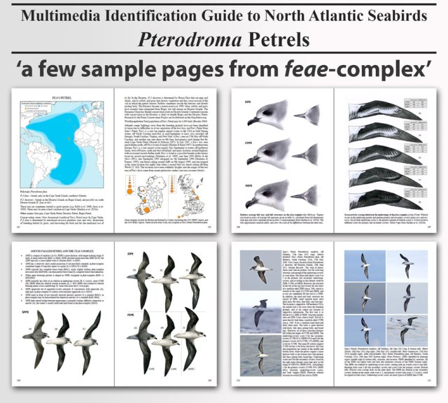 pterodromas-sample